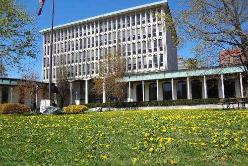 Dandelions adorn the doomed Board of Ed lawn (RTH file photo)