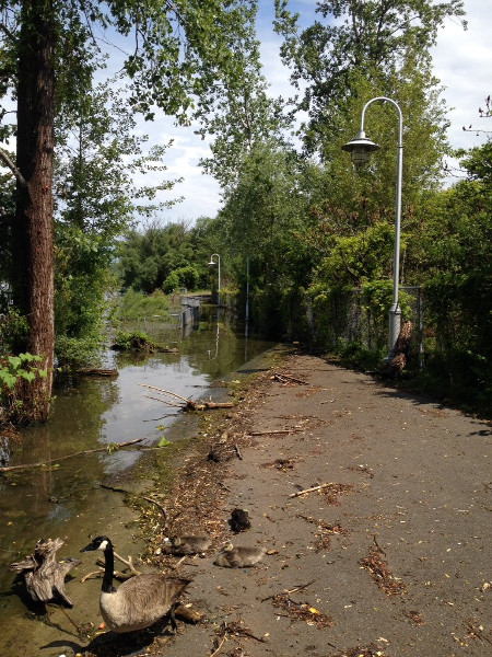Waterfront Trail flooded, photo taken on June 25, 2017 (Image Credit: Brad Young)