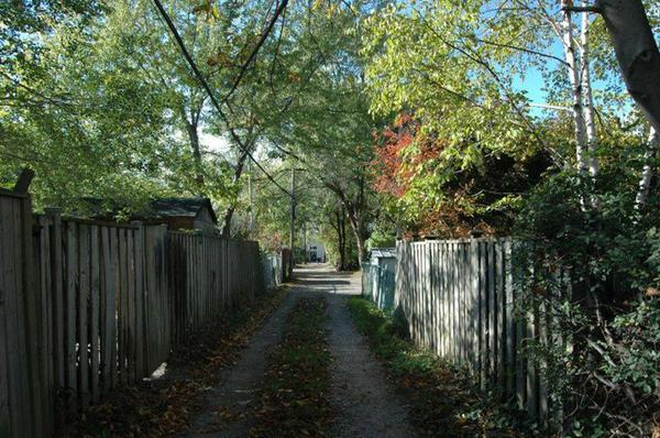 Typical green leafy laneway in Hamilton