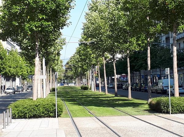Park-like LRT lines in central Grenoble