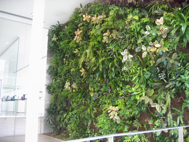 The living wall at the Hamilton Public Library Central branch