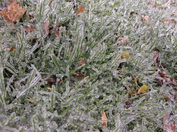 Grass in Hamilton is freezing over from the weather conditions, creating ice patches and icicle shaped strands of grass (Image Credit: Isabella Lopes/RSJ)