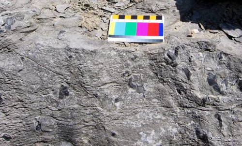 Figure 2. Onondaga limestone with chert, Hagersville (scale in cms).
