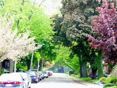 Trees clean the air. Trees improve water quality. Trees save energy. Trees raise real estate value. Trees are good for business. Trees help stop inner city violence. The list goes on. (RTH File Photo)