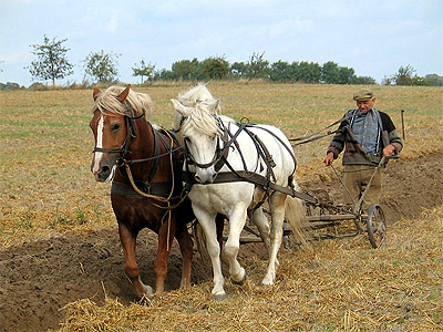 The plough was a significant invention and beneficial tool of convenience for humans. (Image Source: Wikipedia)