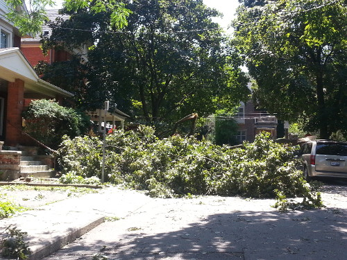 Mapleside was blocked by a fallen tree.